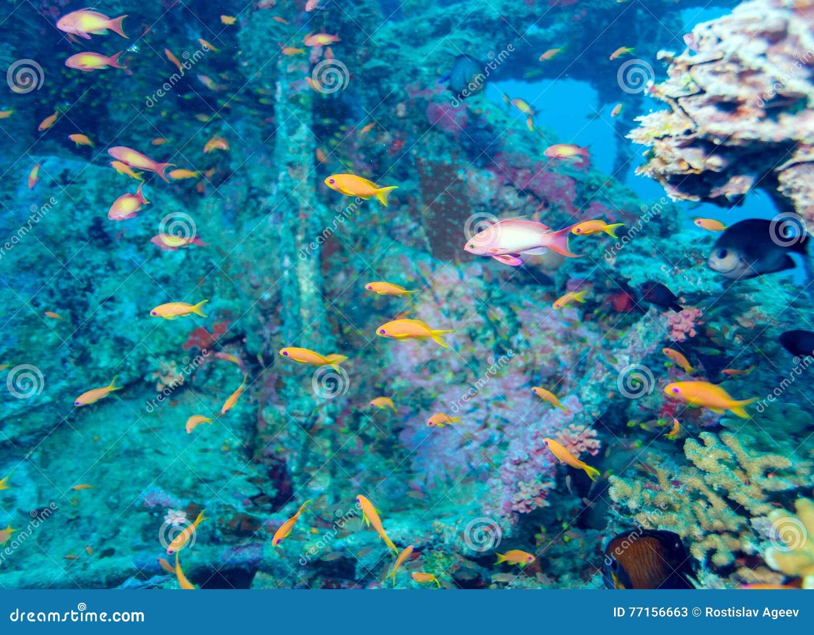 École des poissons près de Coral Reef, Maldives