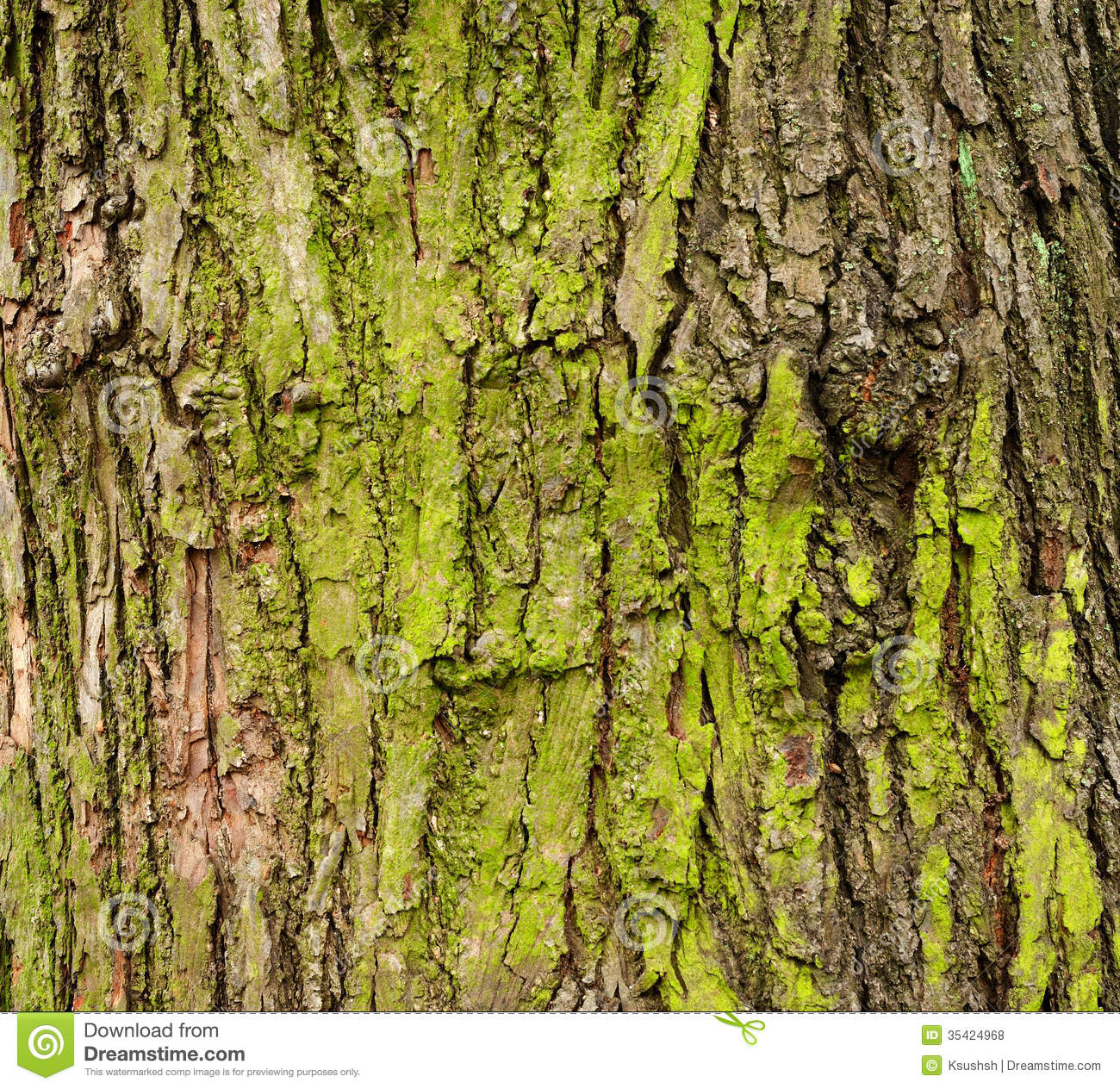 Mossy Green 201 Corce D Arbre Moussue Photos Libres De Droits Image