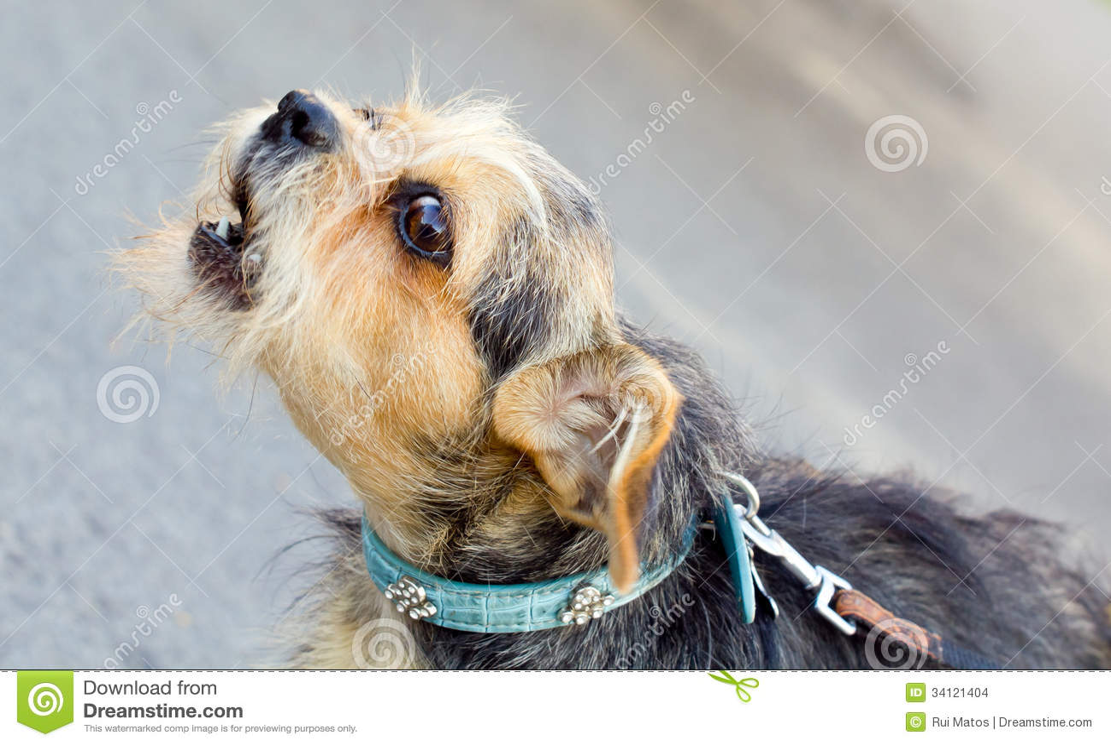 Écorcement de chien