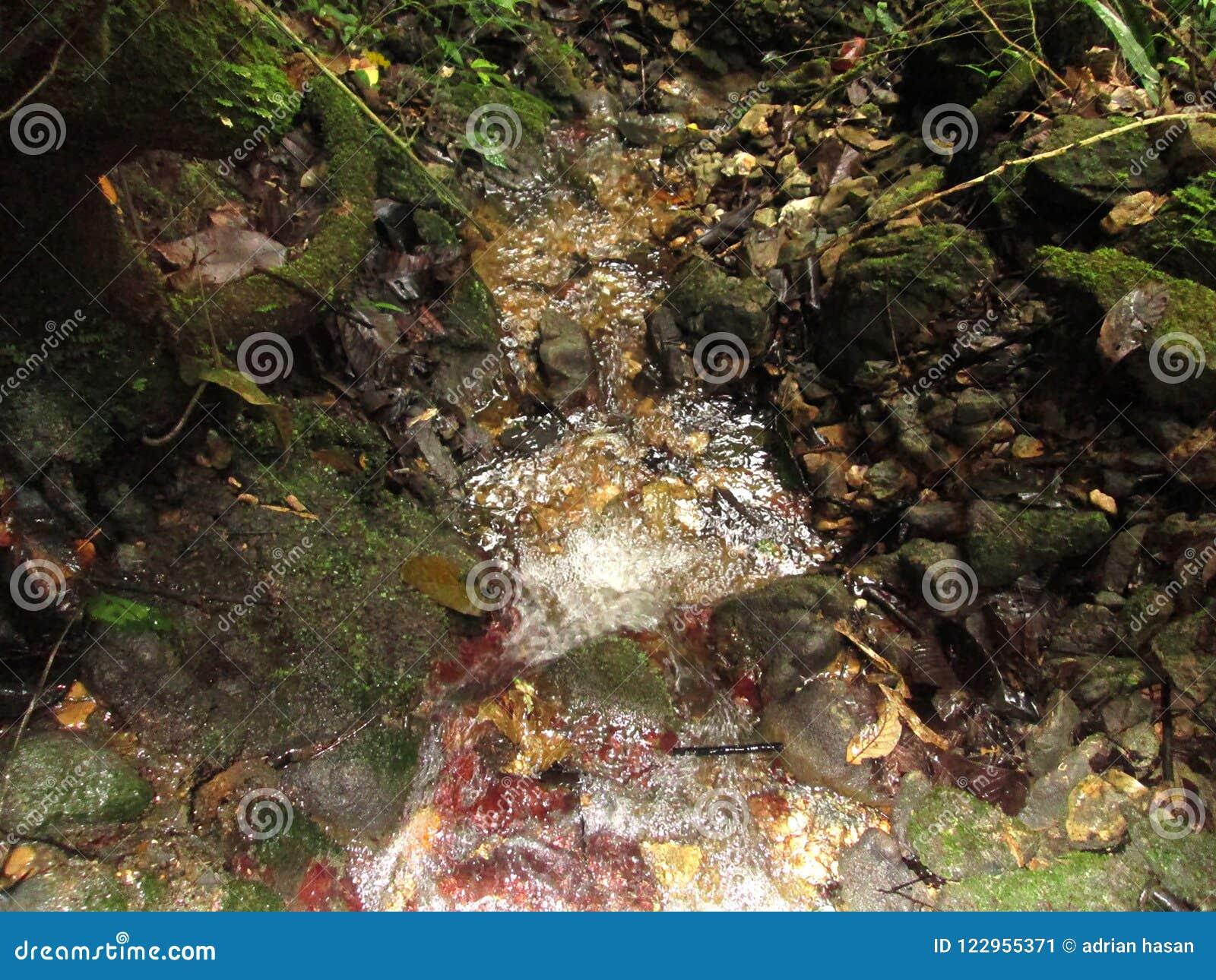 écoulement de Clear Springs dans les forêts tropicales