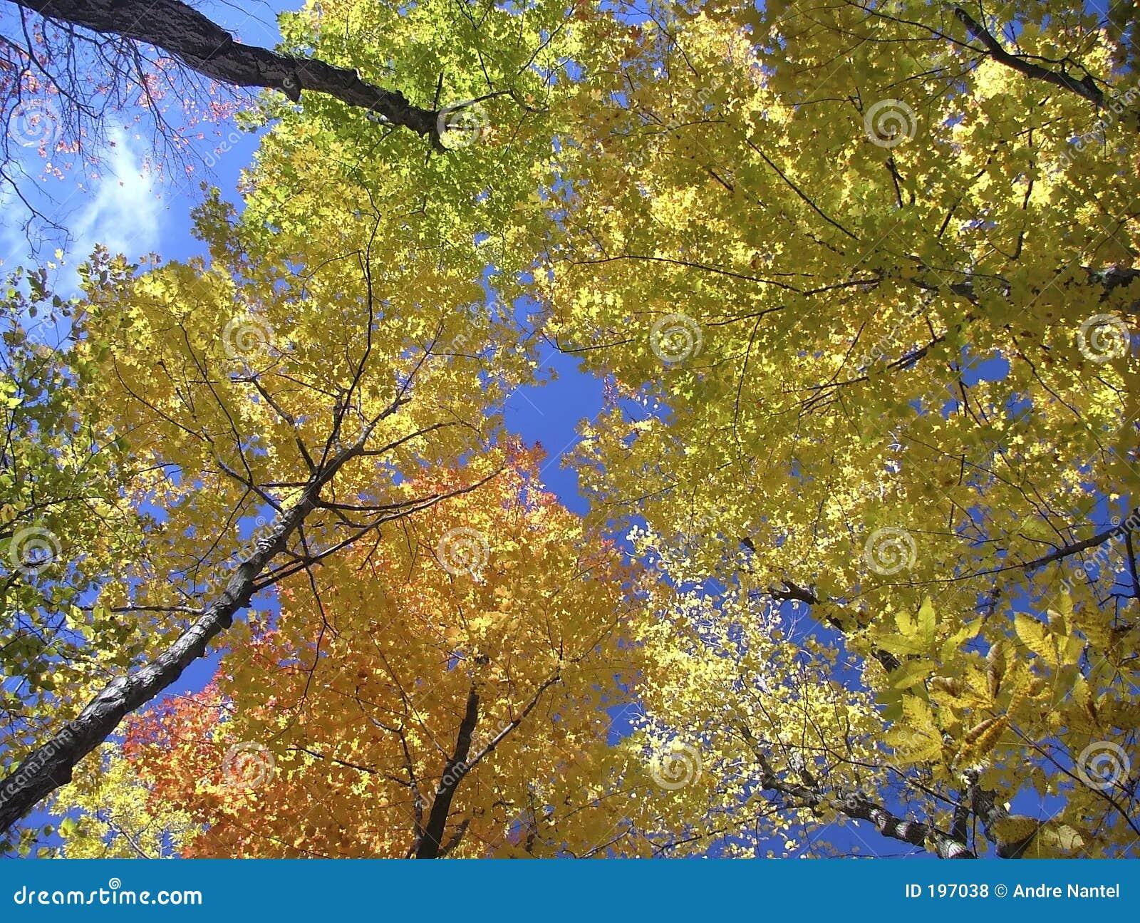Écran d automne