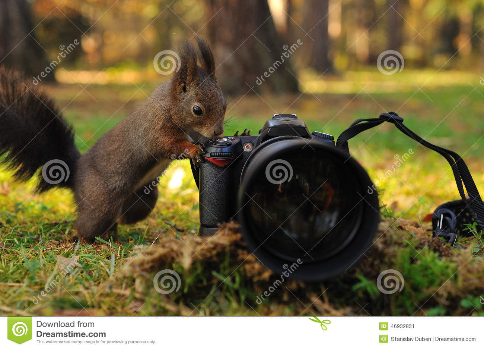 Écureuil brun curieux avec l appareil-photo