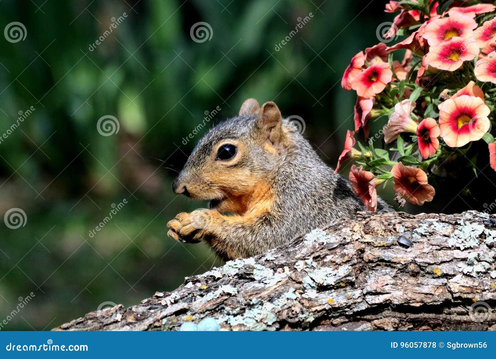 Écureuil semi-transparent