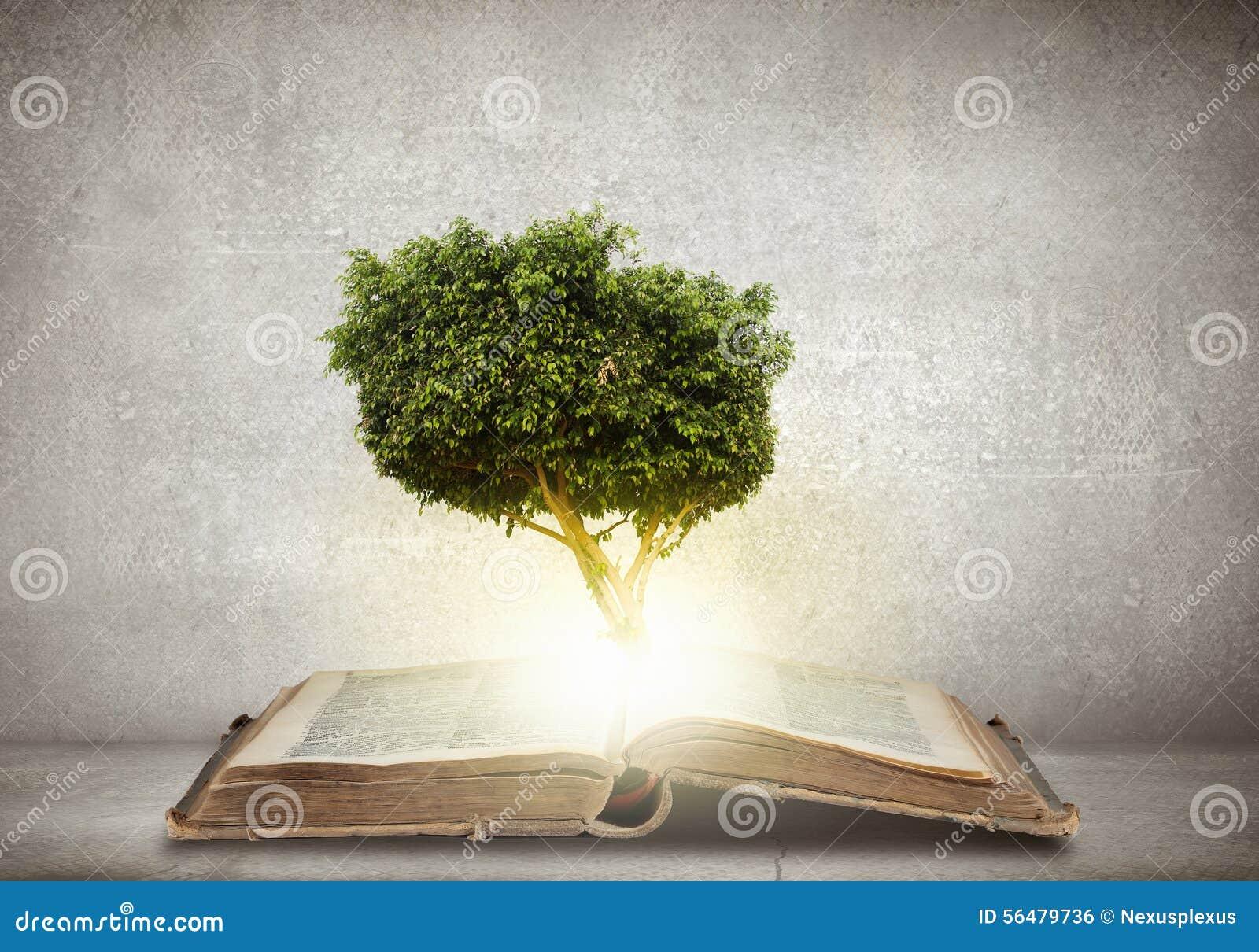 Éducation de lecture et d individu