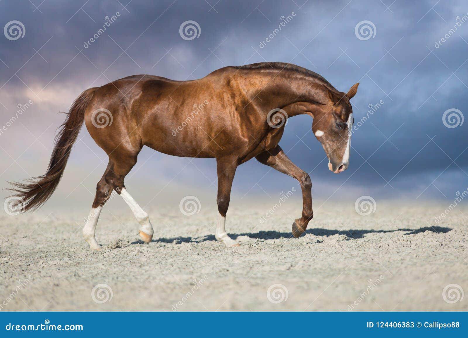 Égua vermelha corrida no deserto