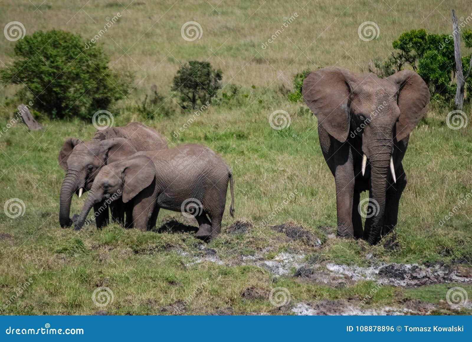 Éléphant dans le masai Mara Kenya Africa