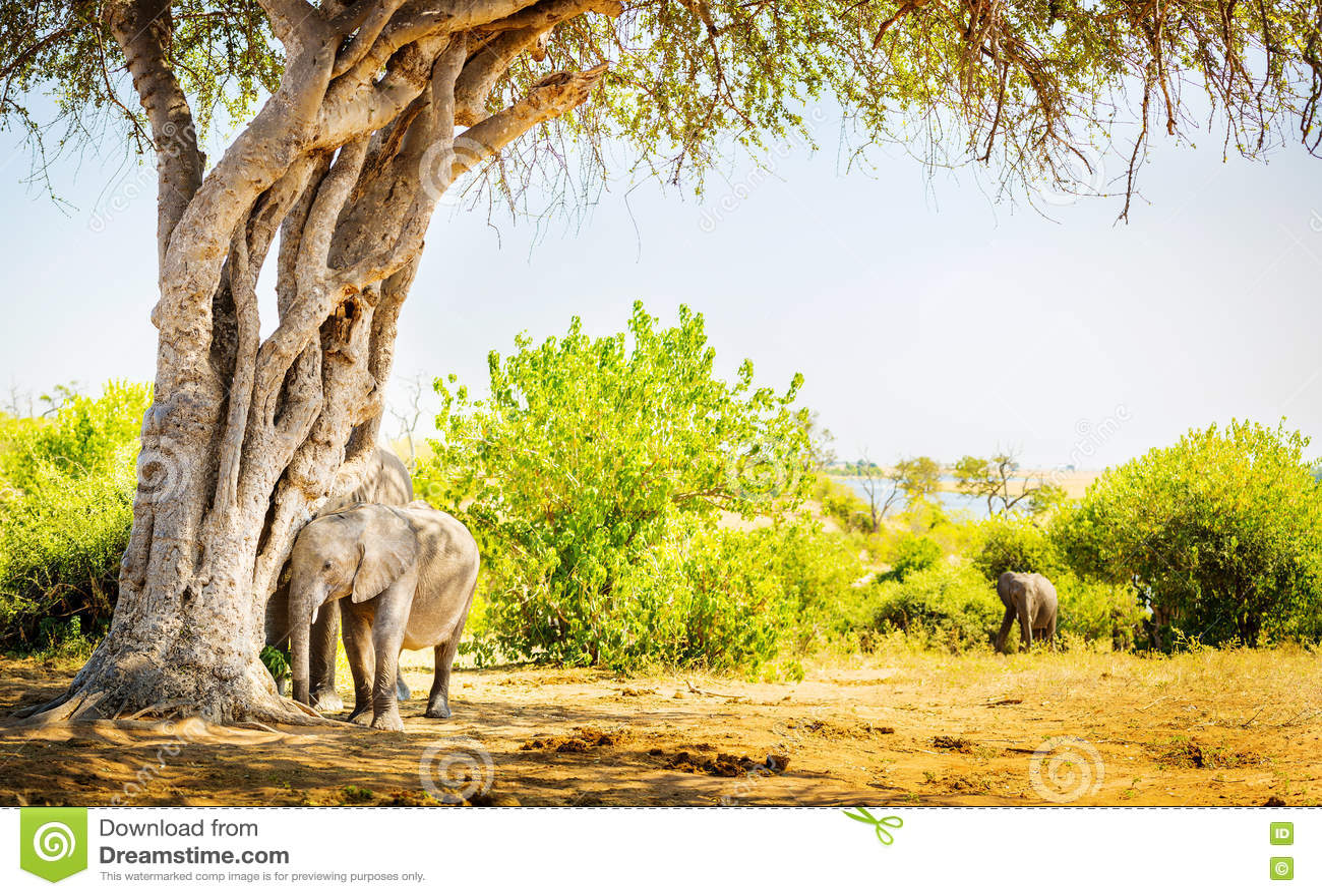 Éléphant de bébé se cachant sous l arbre