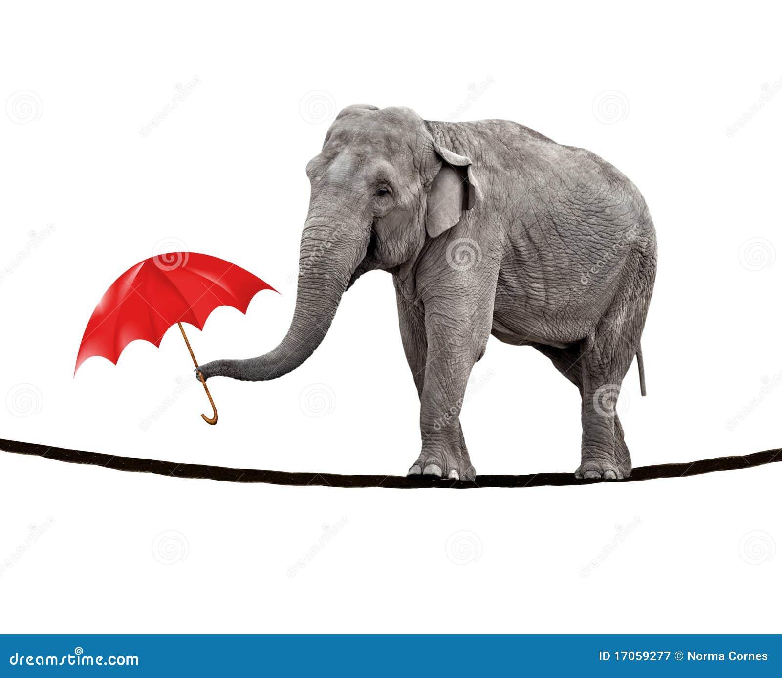 Éléphant de marche de Tightrope