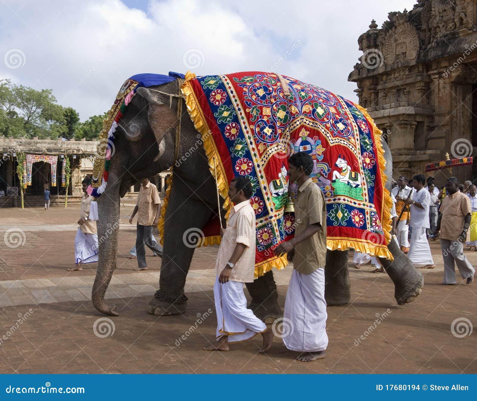 Éléphant de temple - Thanjavur - Inde