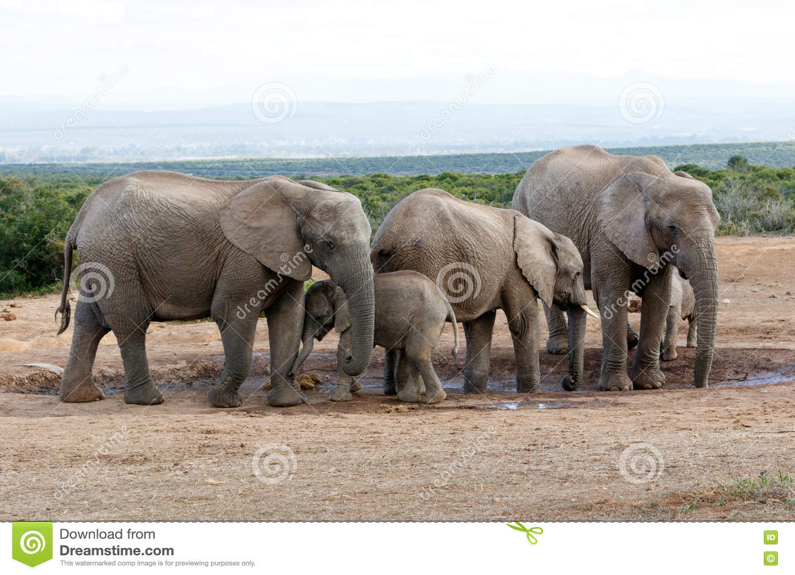 Éléphant Familie de Bush d Africain