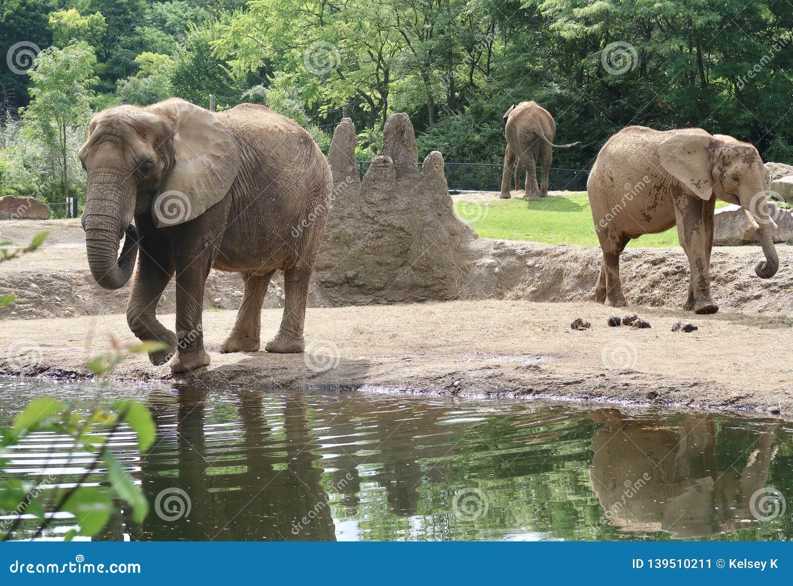 Éléphants au zoo