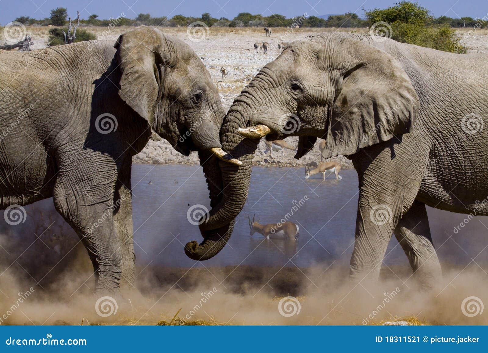 Éléphants de combat