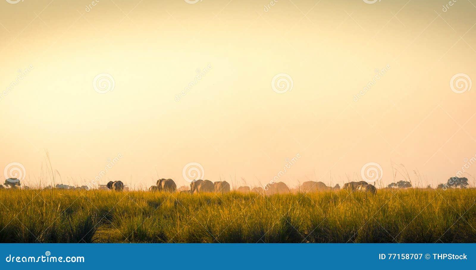 Éléphants marchant loin sur les plaines africaines