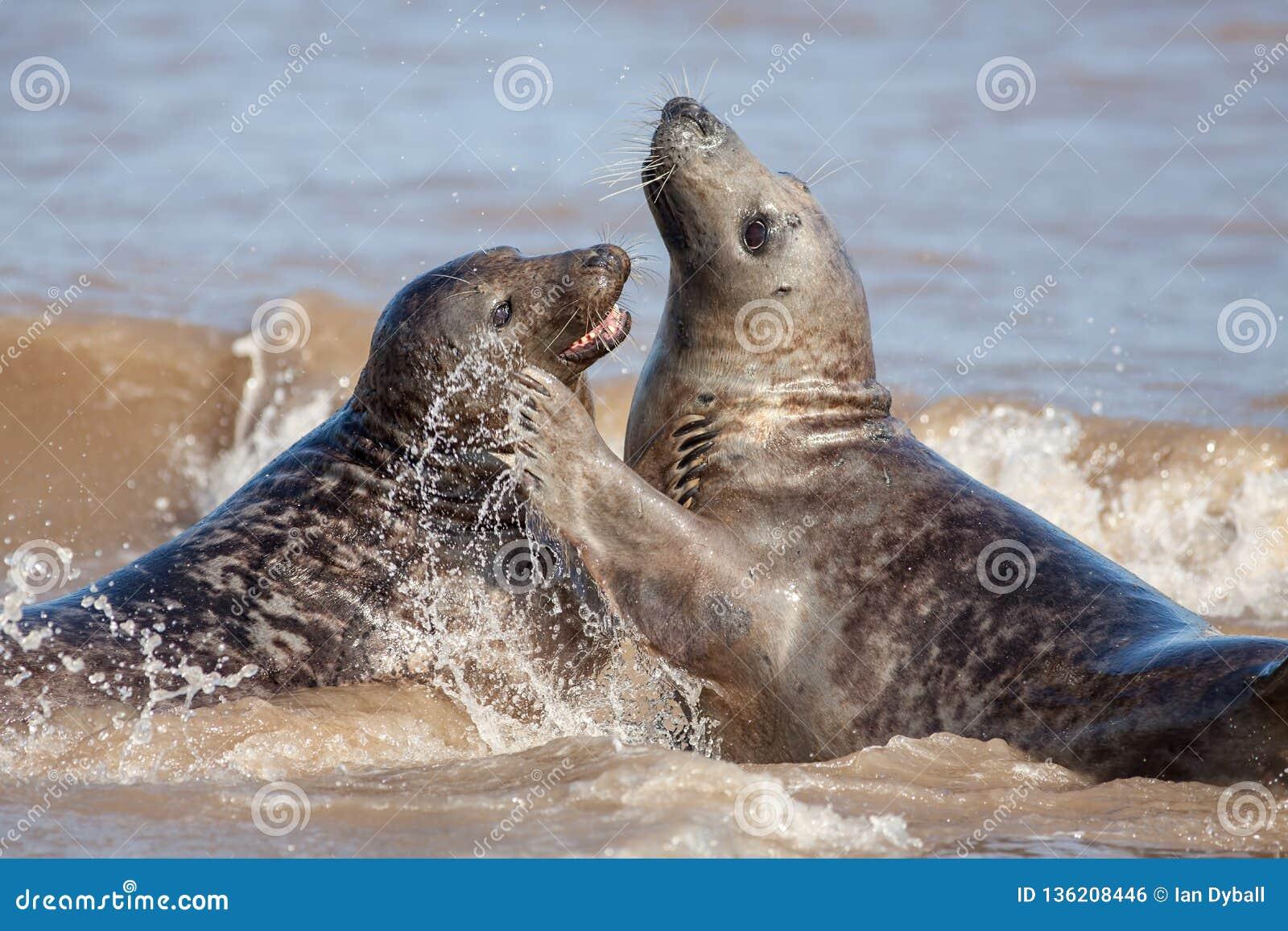Émotion animale Couples aimants de joint ayant l amusement en mer