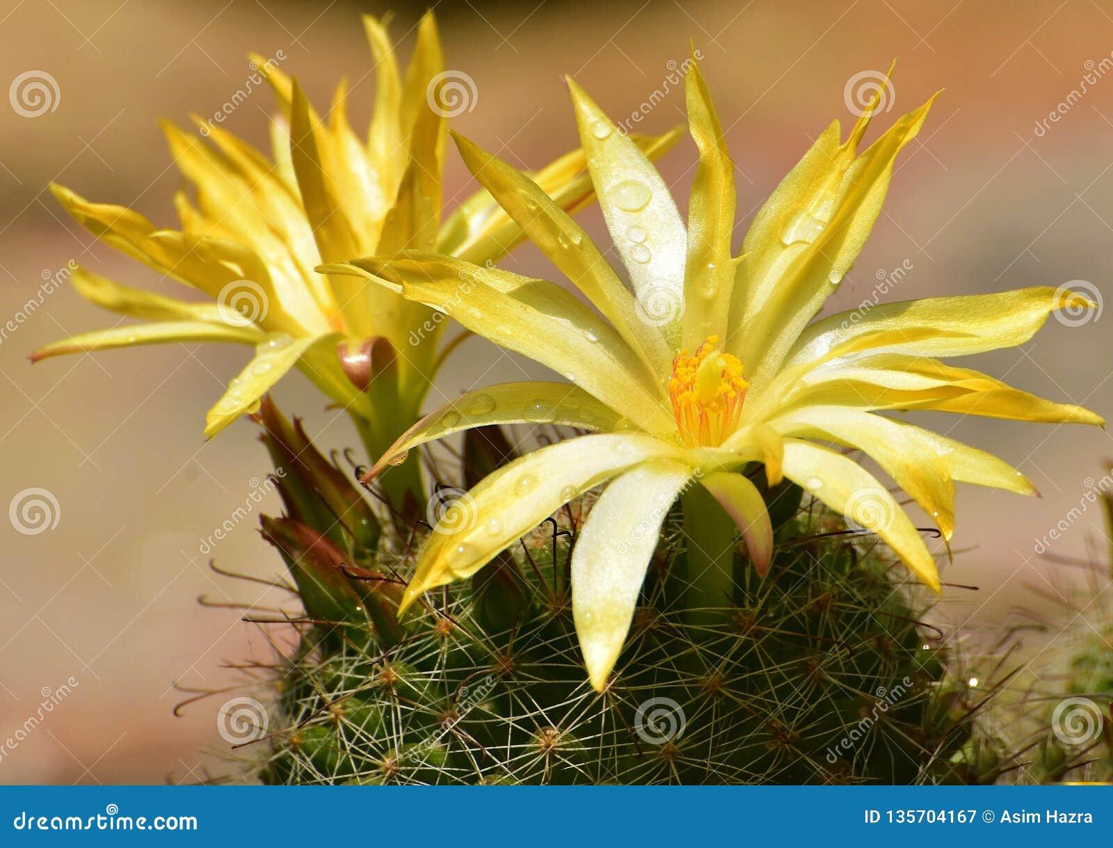 Épine et fleur
