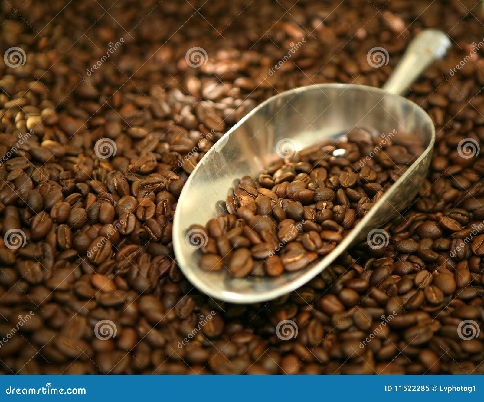 Épuisette des grains de café