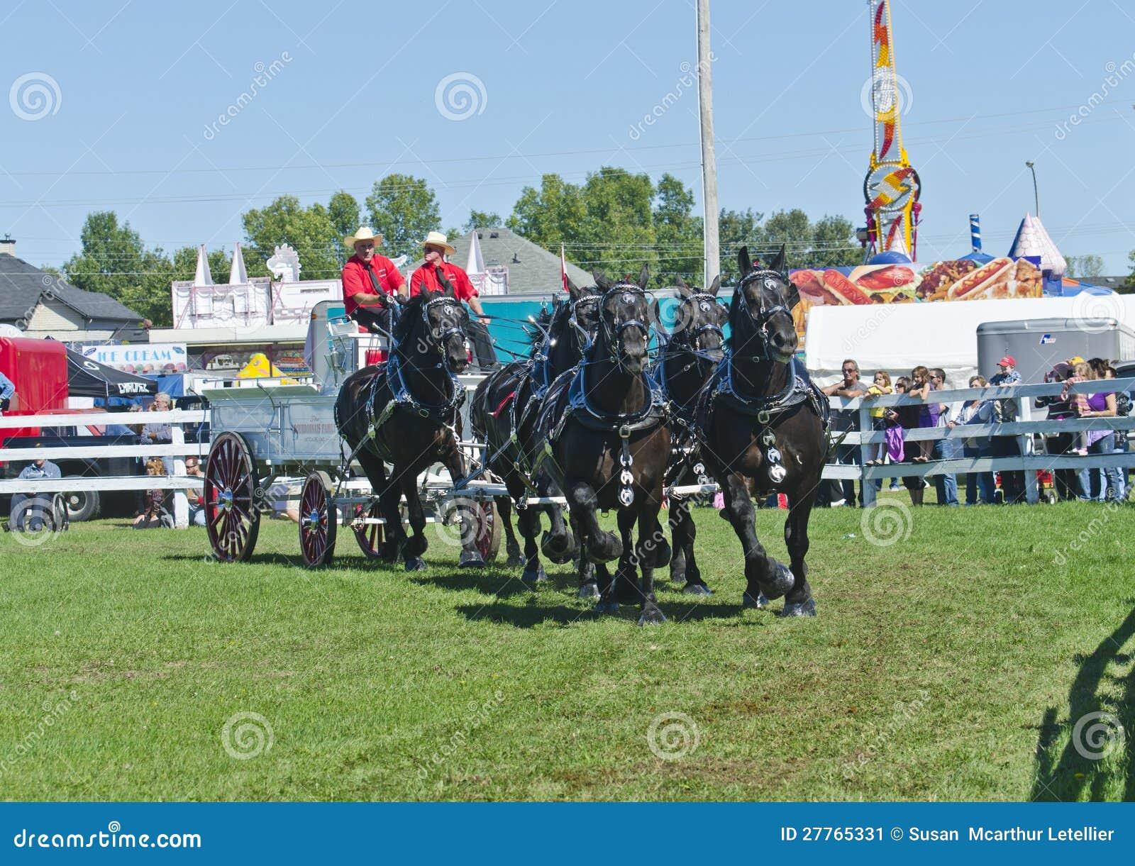 Équipe des chevaux de trait de Percheron tirant un chariot
