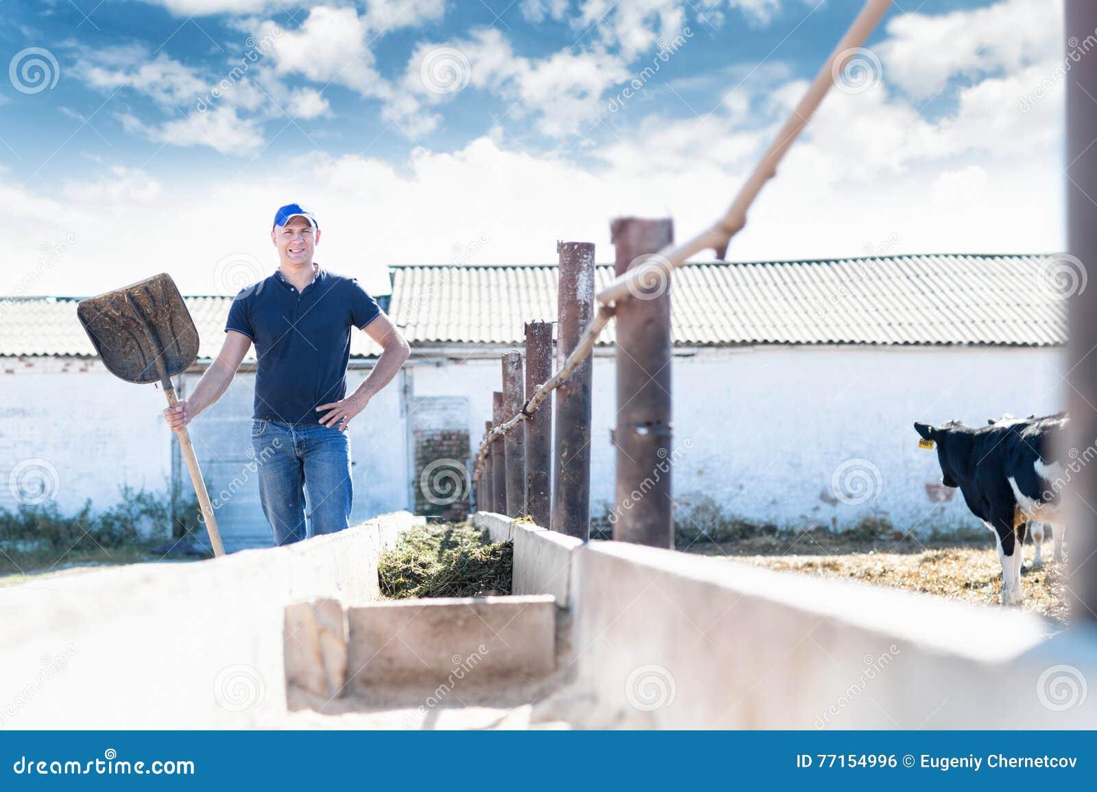 Équipez l agriculteur travaillant à la ferme avec des vaches laitières