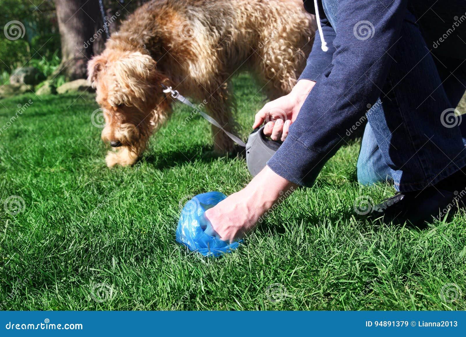 Équipez sélectionner/nettoyant des crottes de chien