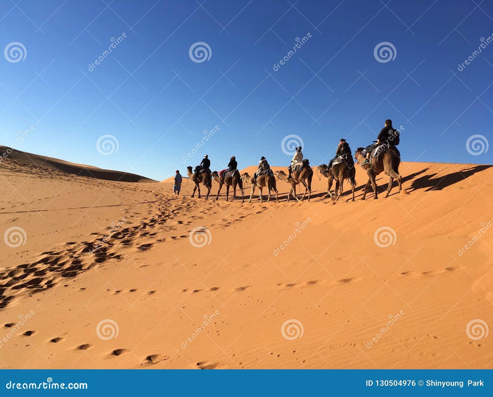 Équitation de chameau dans le désert du Sahara