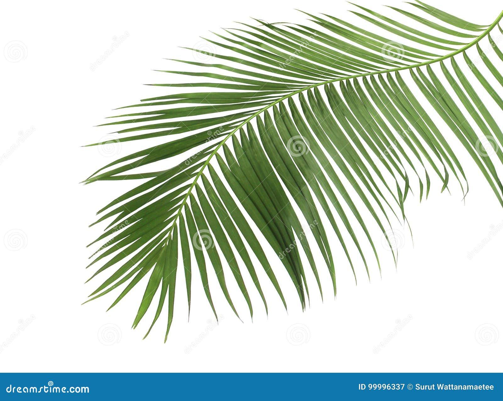 Été de concept avec la palmette verte de tropical fronde florale