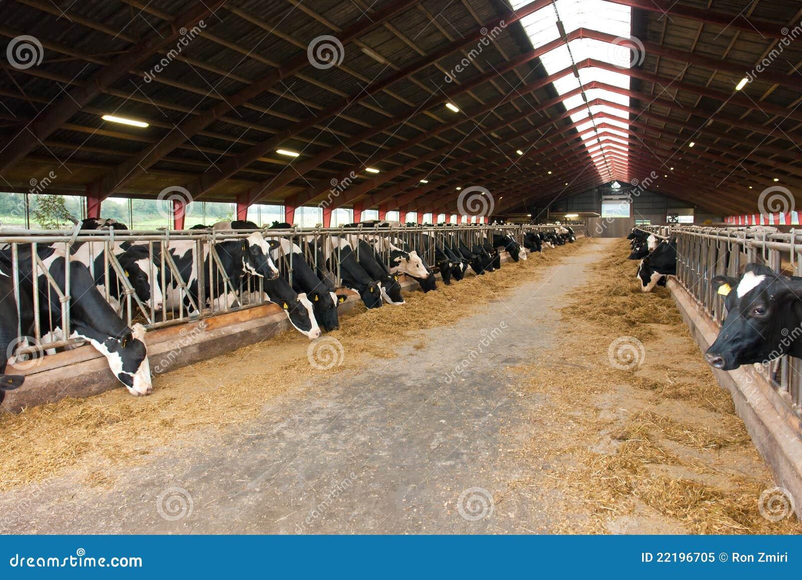 table moderne de ferme avec des vaches image stock image du domestique blanc 22196705. Black Bedroom Furniture Sets. Home Design Ideas