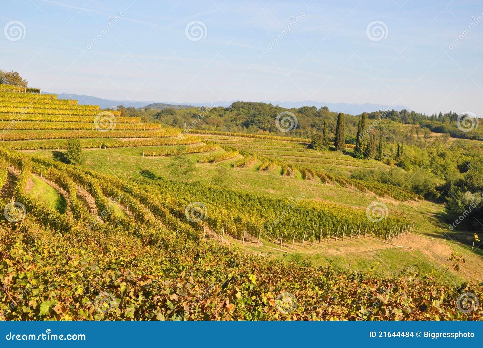 Établissement vinicole et vin Friuli Italie
