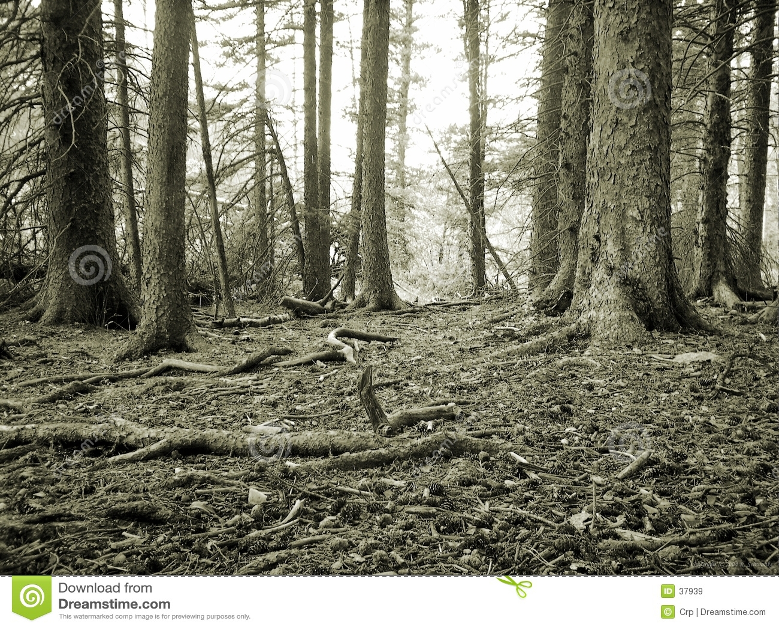Étage de forêt