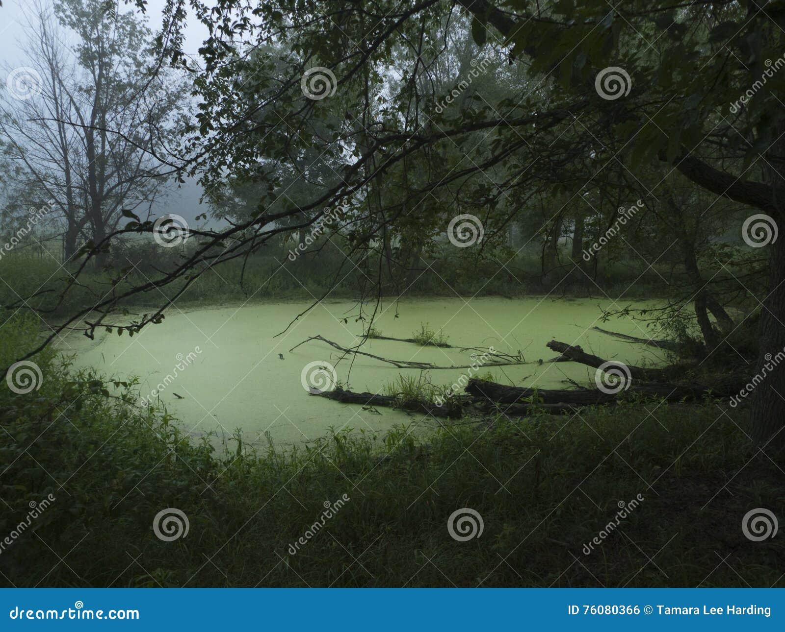 Étang avec des algues ou écume en été