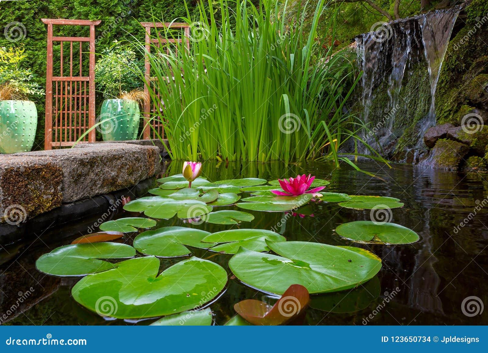 Étang De Jardin Avec Les Usines Et La Cascade Dans L\'arrière ...