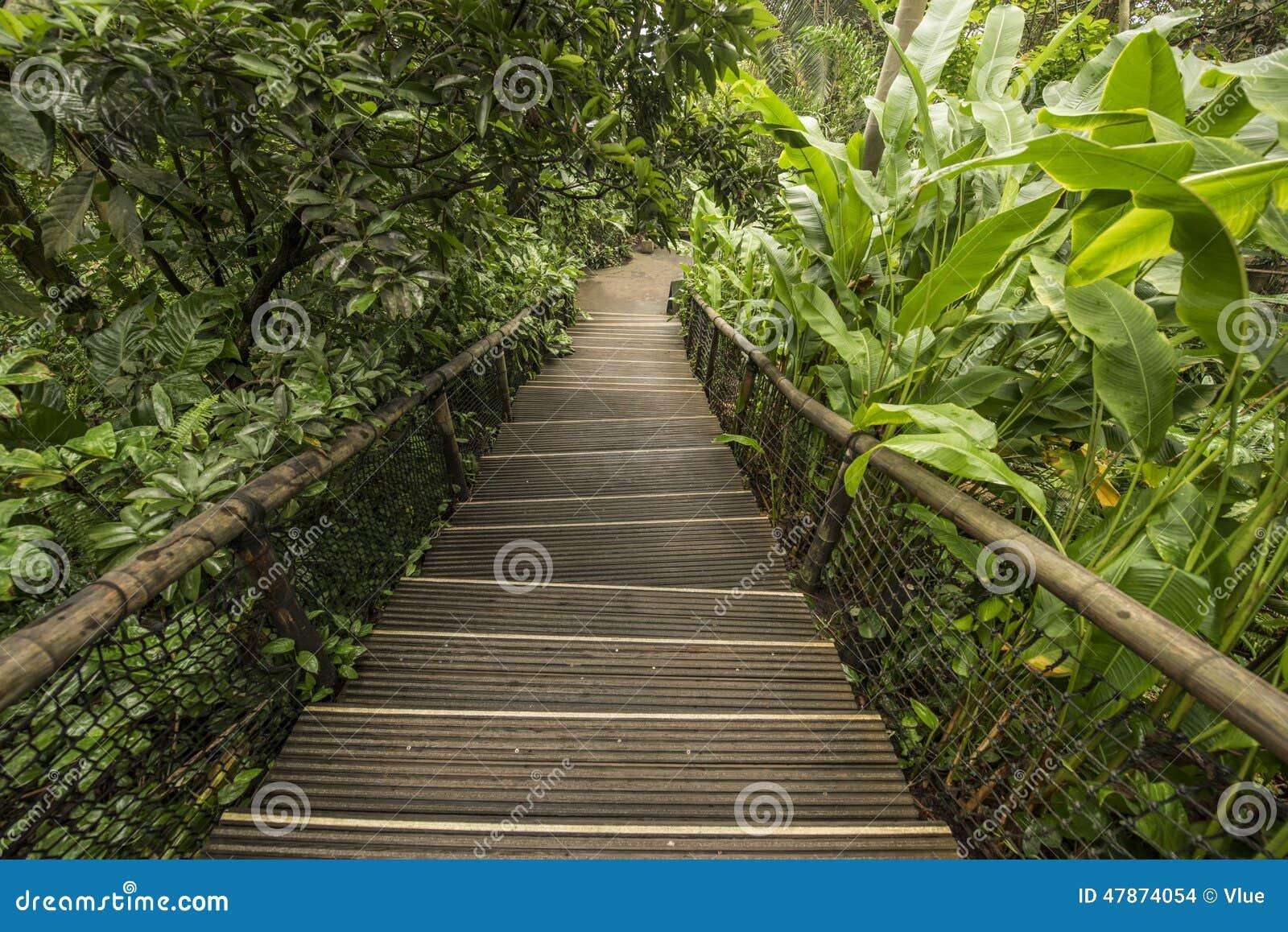 Tapes d 39 escalier dans le jardin de jungle photo stock image 47874054 for Escalier dans un jardin