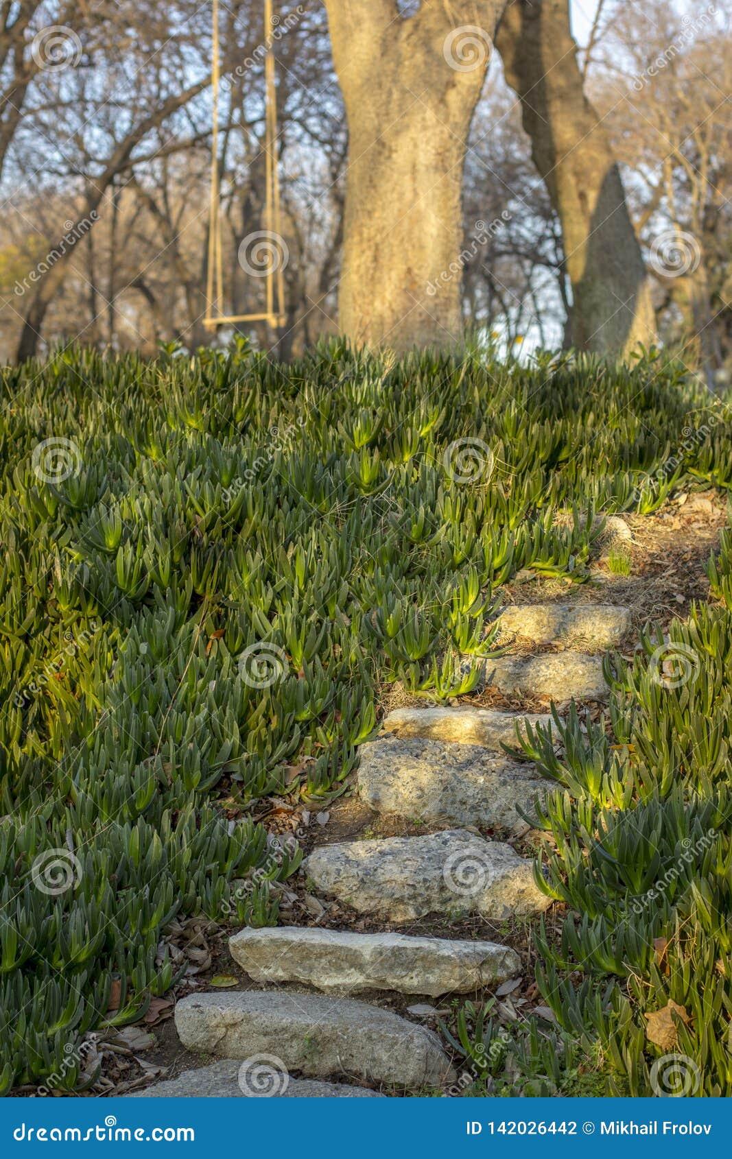 Étapes en pierre en parc autour des verts