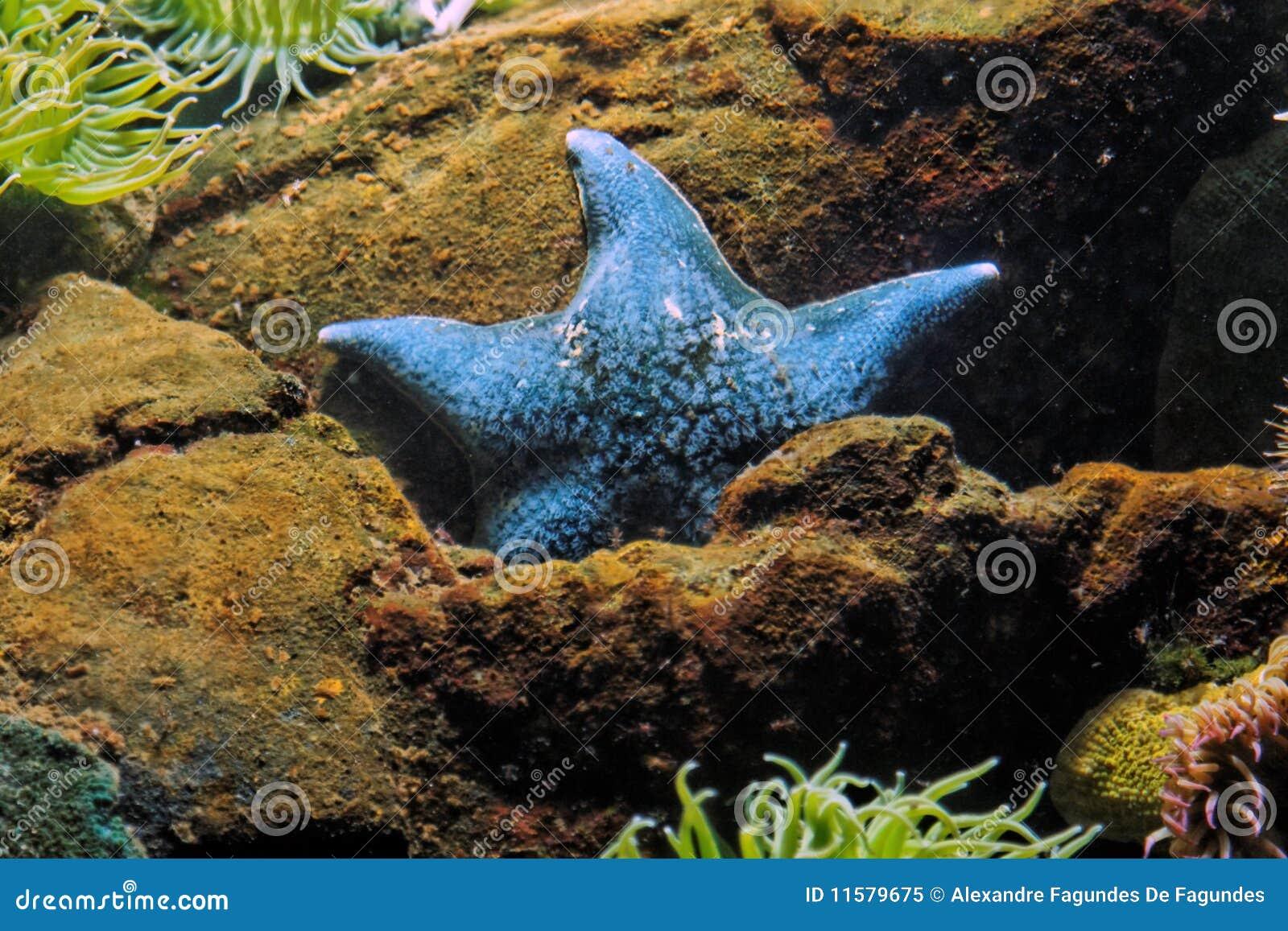 201 toile de mer bleue photo libre de droits image 11579675