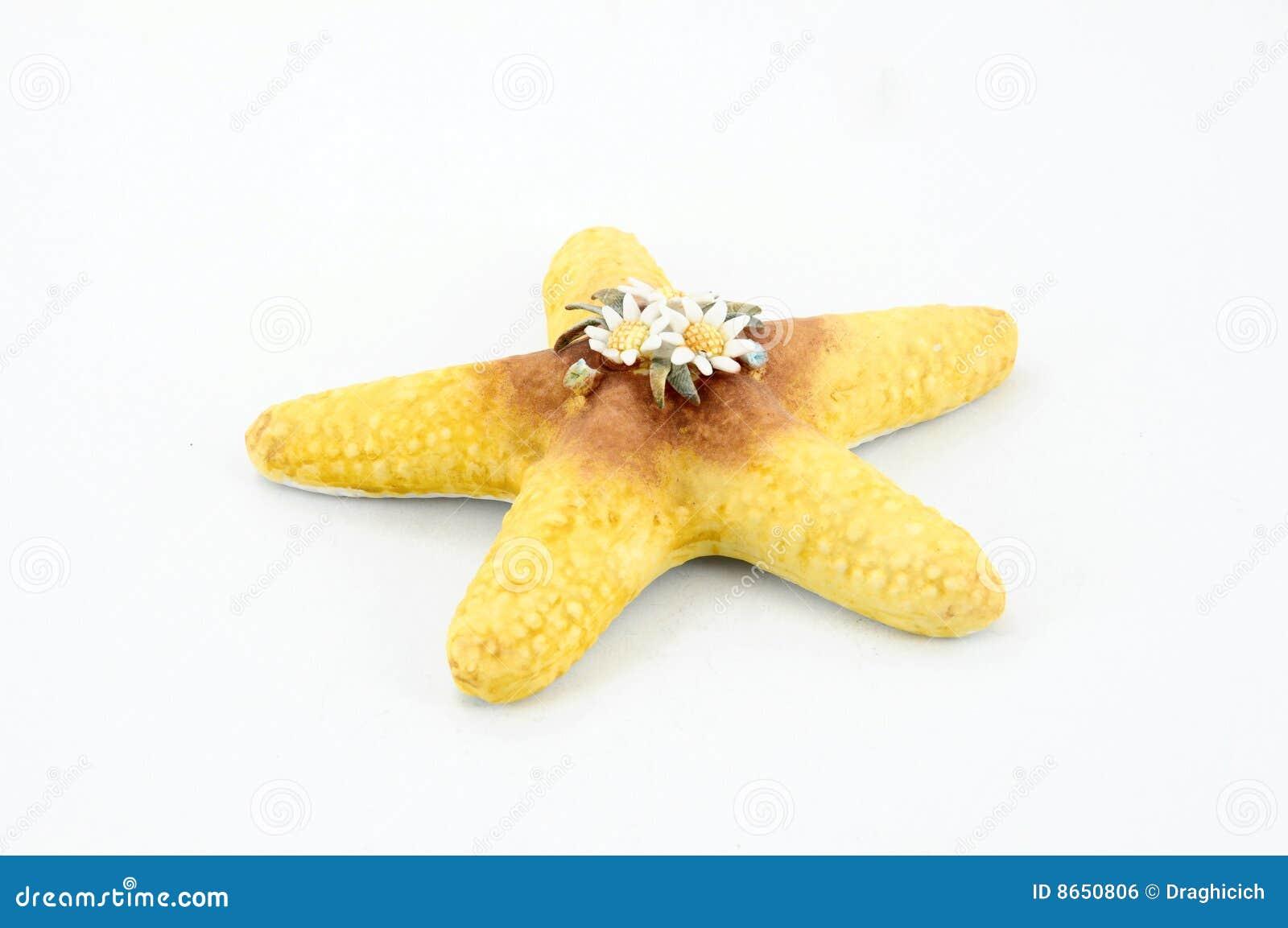 Étoile de mer de porcelaine