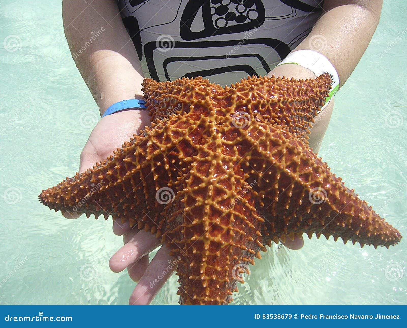 étoile De Mer En République Dominicaine De Plage De Saona