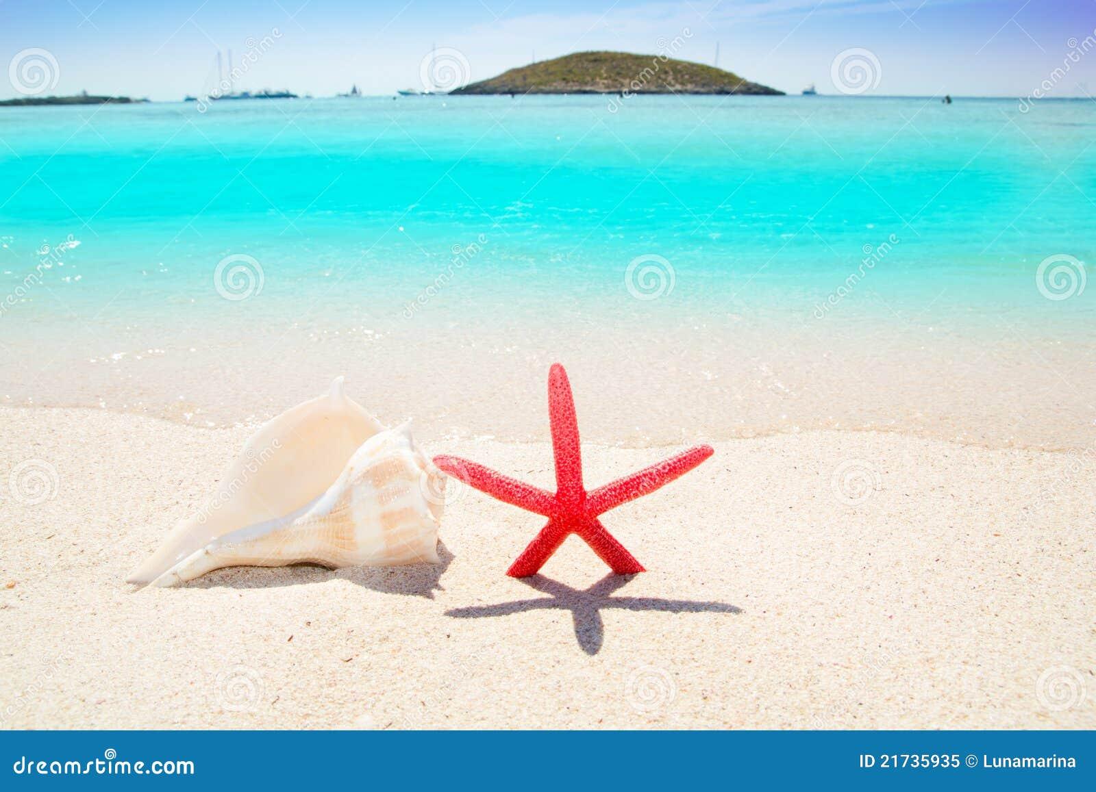Étoiles de mer et seashell en plage tropicale