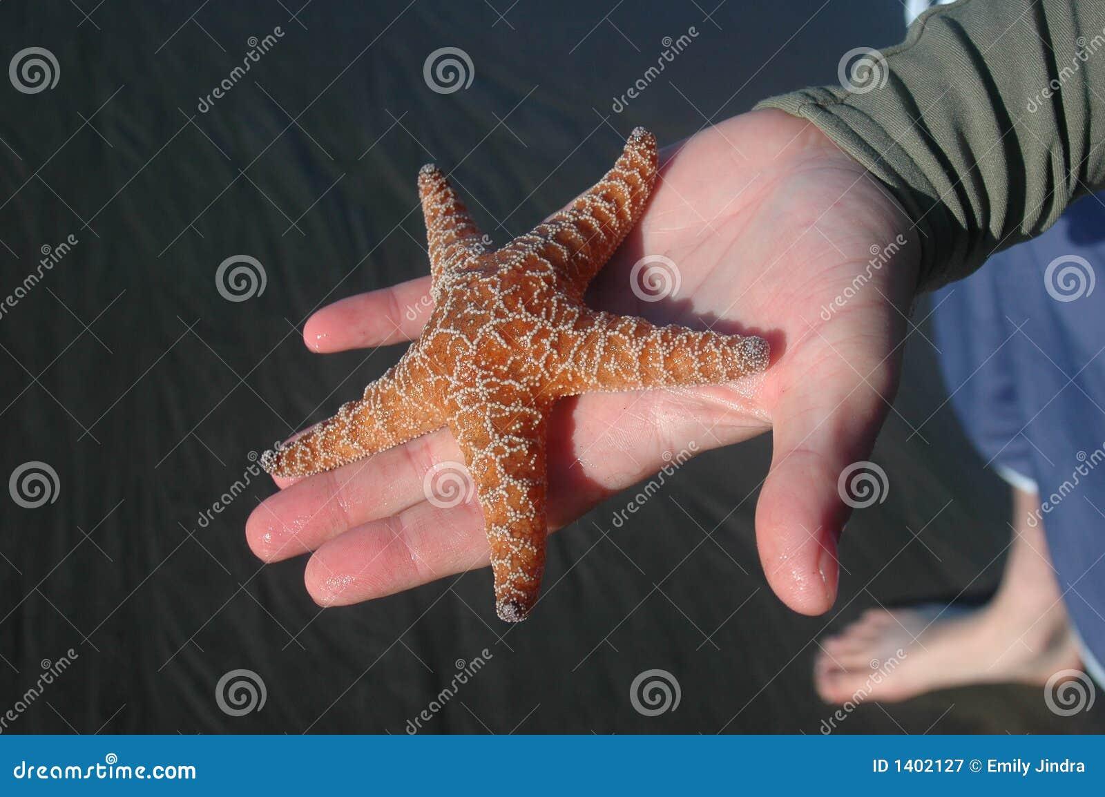 Étoiles de mer oranges