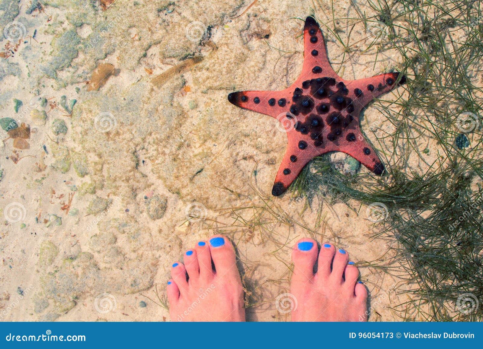 Étoiles de mer rouges et pieds femelles en mer Bord de la mer avec le sable blanc Vue supérieure de sable de mer avec les pieds f