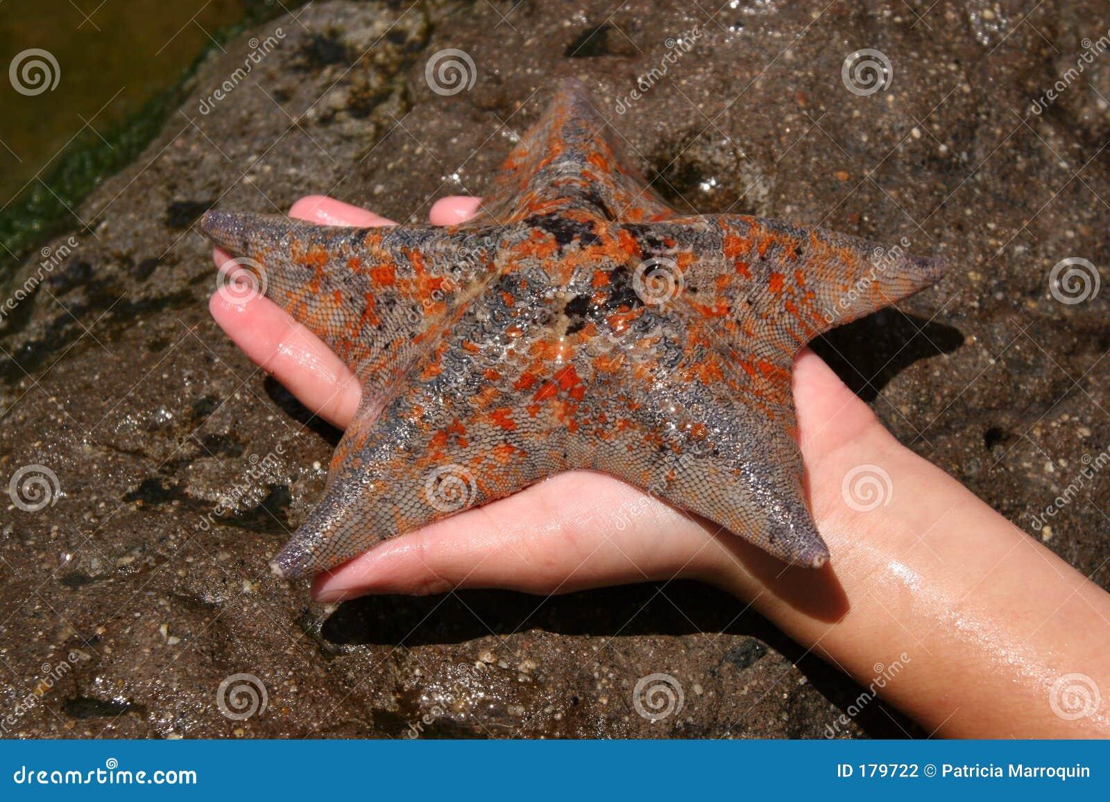 Étoiles de mer tachetées