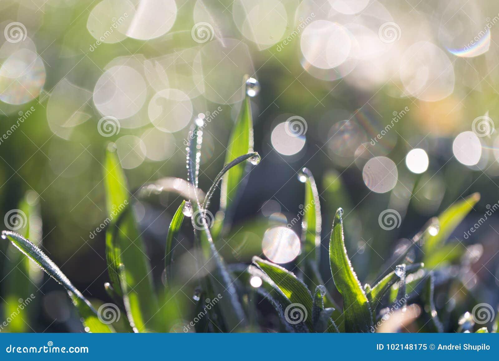 étroit d herbe de gisement de rosée de profondeur