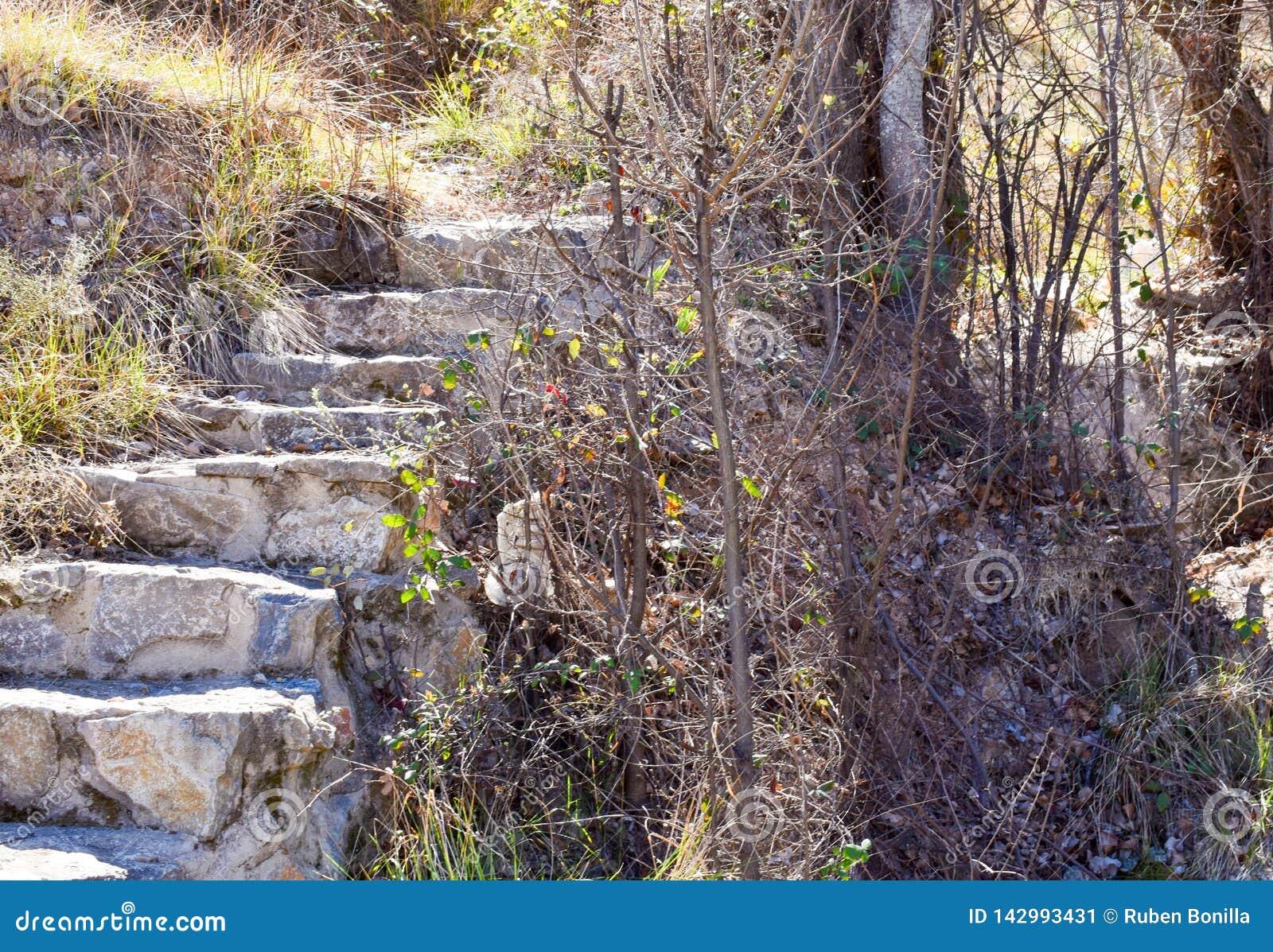 étroit D\'un Escalier Fait Avec Des étapes De Béton Et De ...