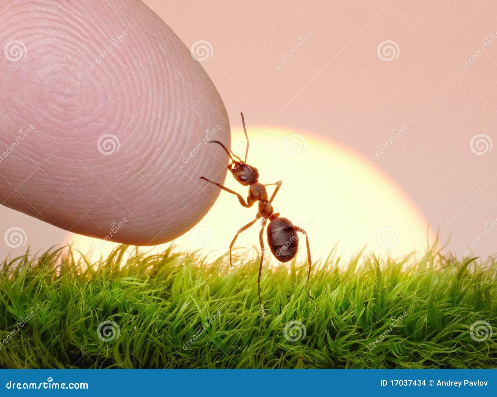 Être humain, nature et fourmi - doigt de l amitié