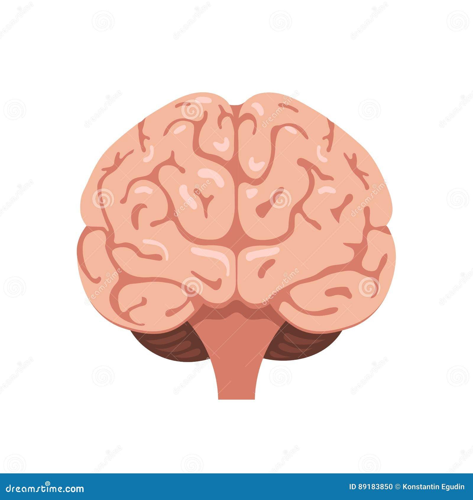 Ícone da opinião dianteira do cérebro