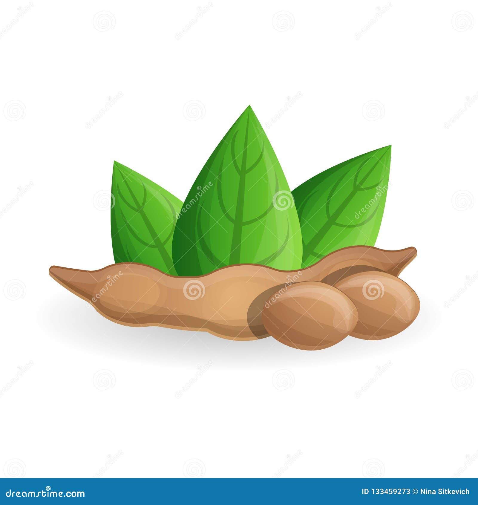 Ícone do feijão de soja, estilo dos desenhos animados