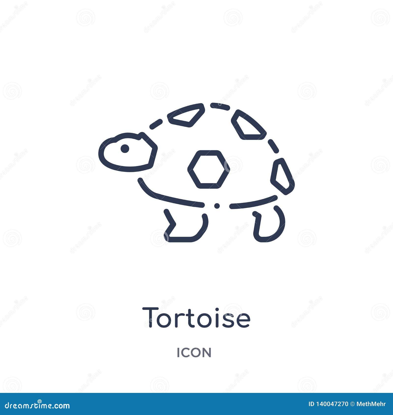 Ícone linear da tartaruga dos animais e da coleção do esboço dos animais selvagens Linha fina vetor da tartaruga isolado no fundo