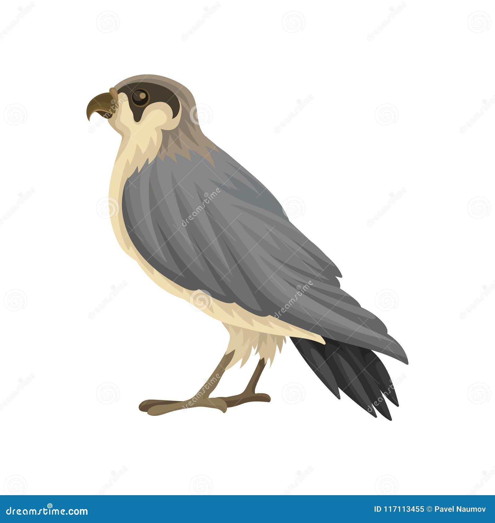 Ícone liso detalhado do vetor do falcão egípcio Pássaro predatório com as asas aguçado cinzento-pretas longas e o bico entalhado