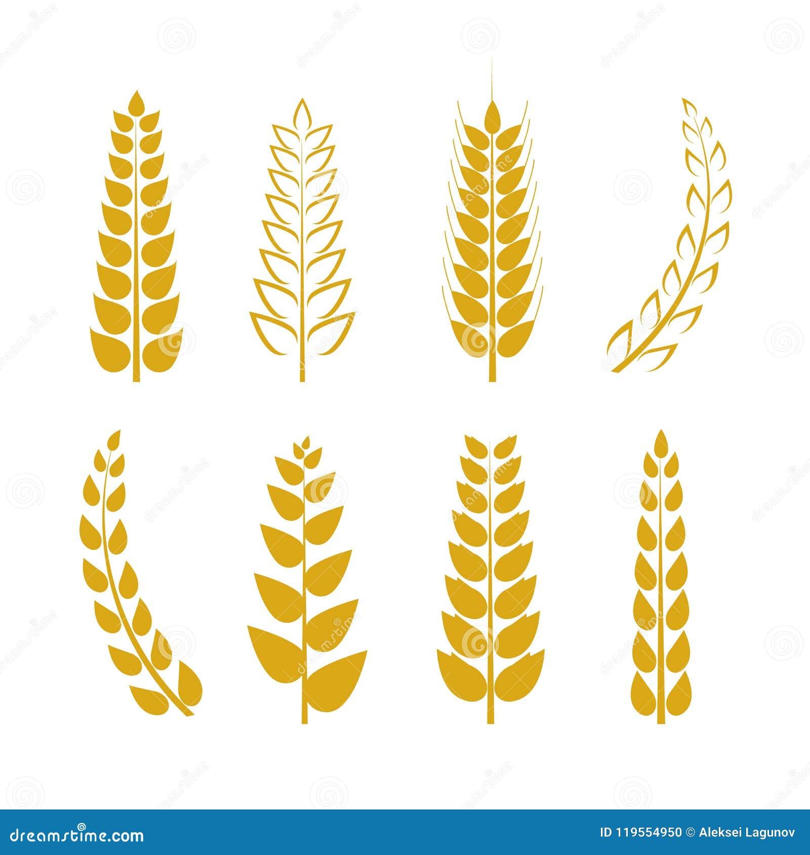 Ícones ajustados, orelhas douradas fundo do trigo do vetor do trigo, Logo Template