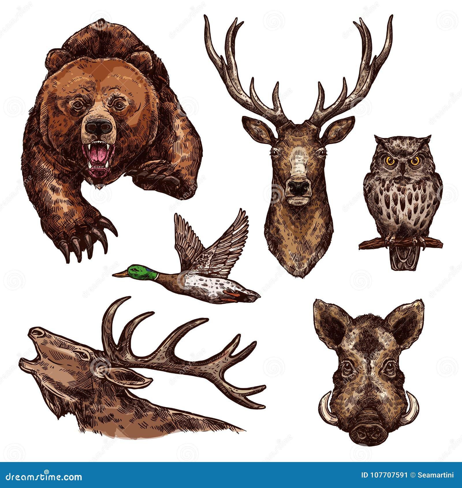 Ícones do esboço do vetor de pássaros dos animais selvagens