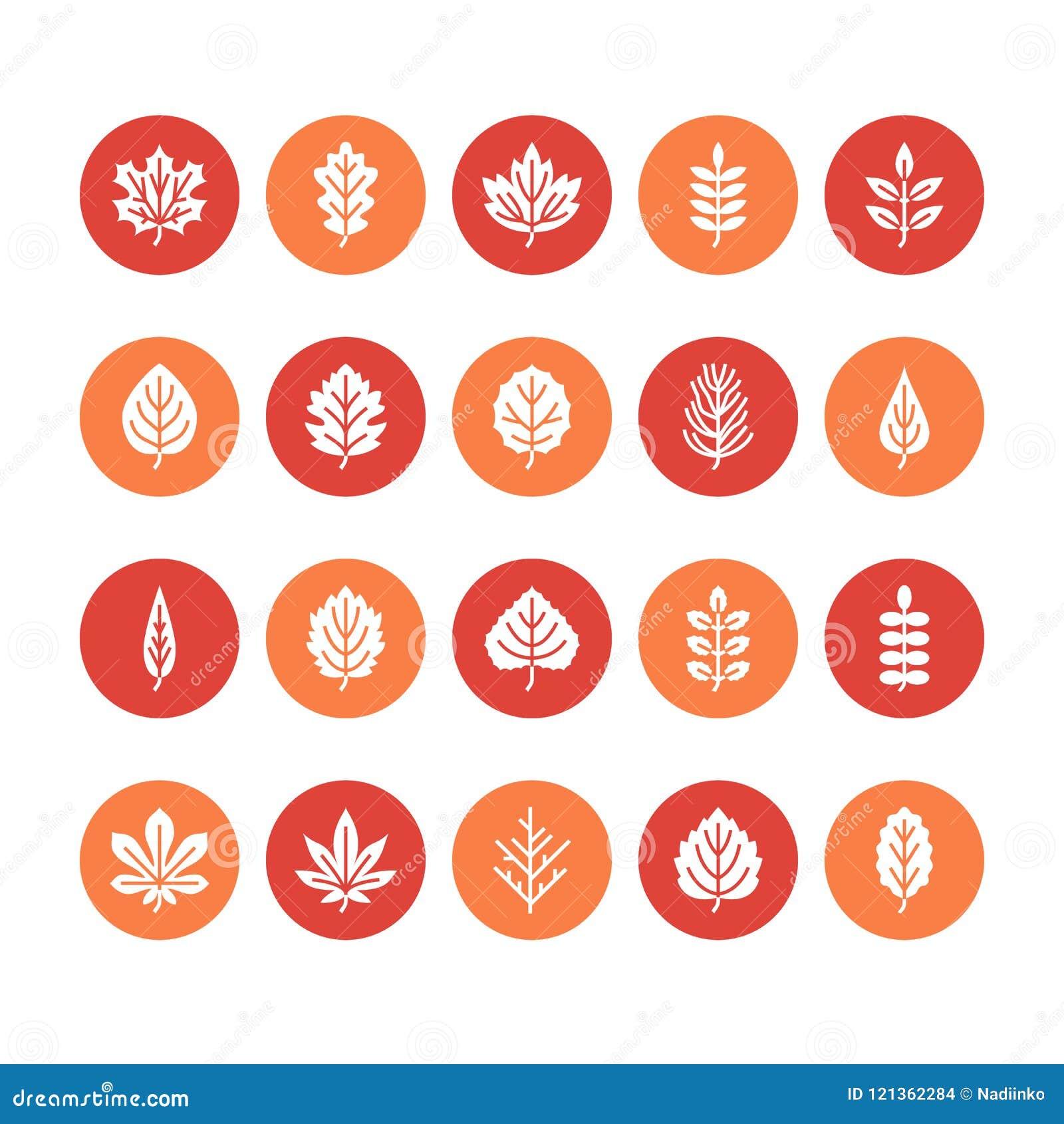 Ícones lisos do glyph das folhas de outono A folha datilografa, Rowan, árvore de vidoeiro, bordo, castanha, carvalho, pinho do ce