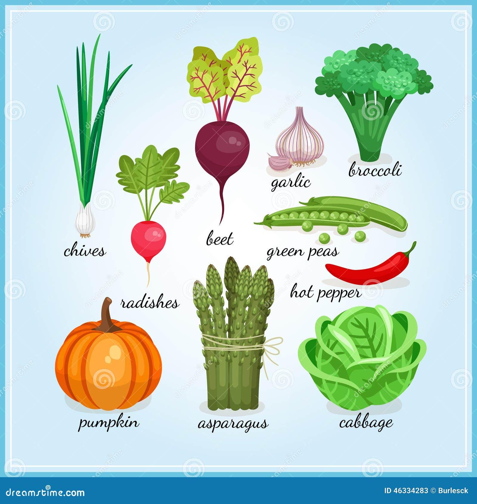 Ícones saudáveis dos legumes frescos